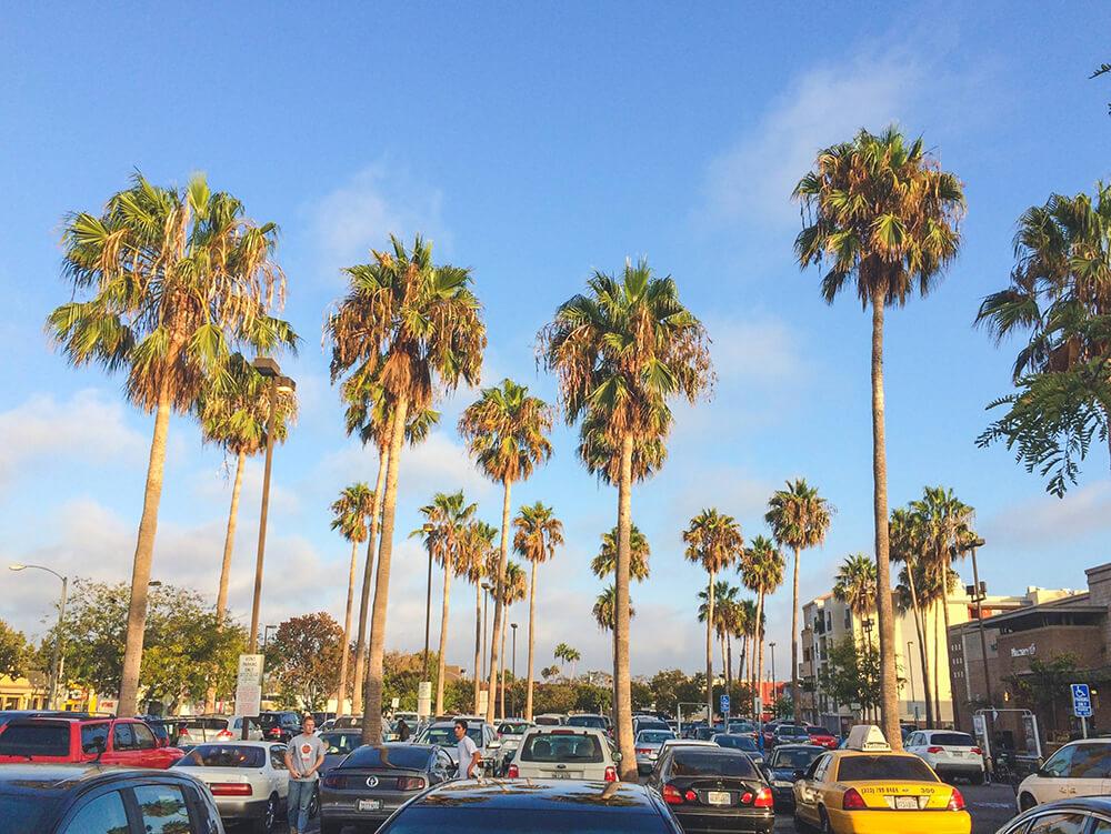 ABD Los Angeles Palmiyeler